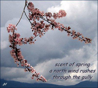 haiku poems about spring - photo #8